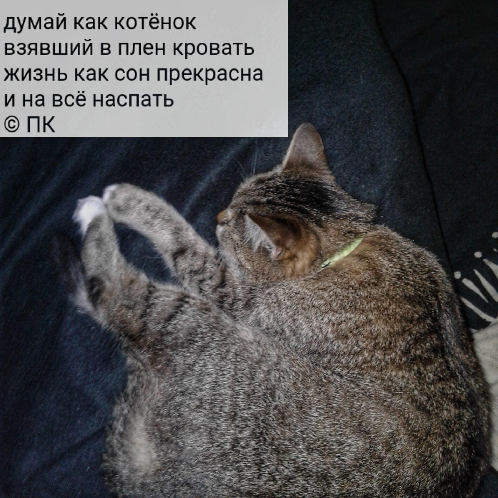 Коты в дождь :)