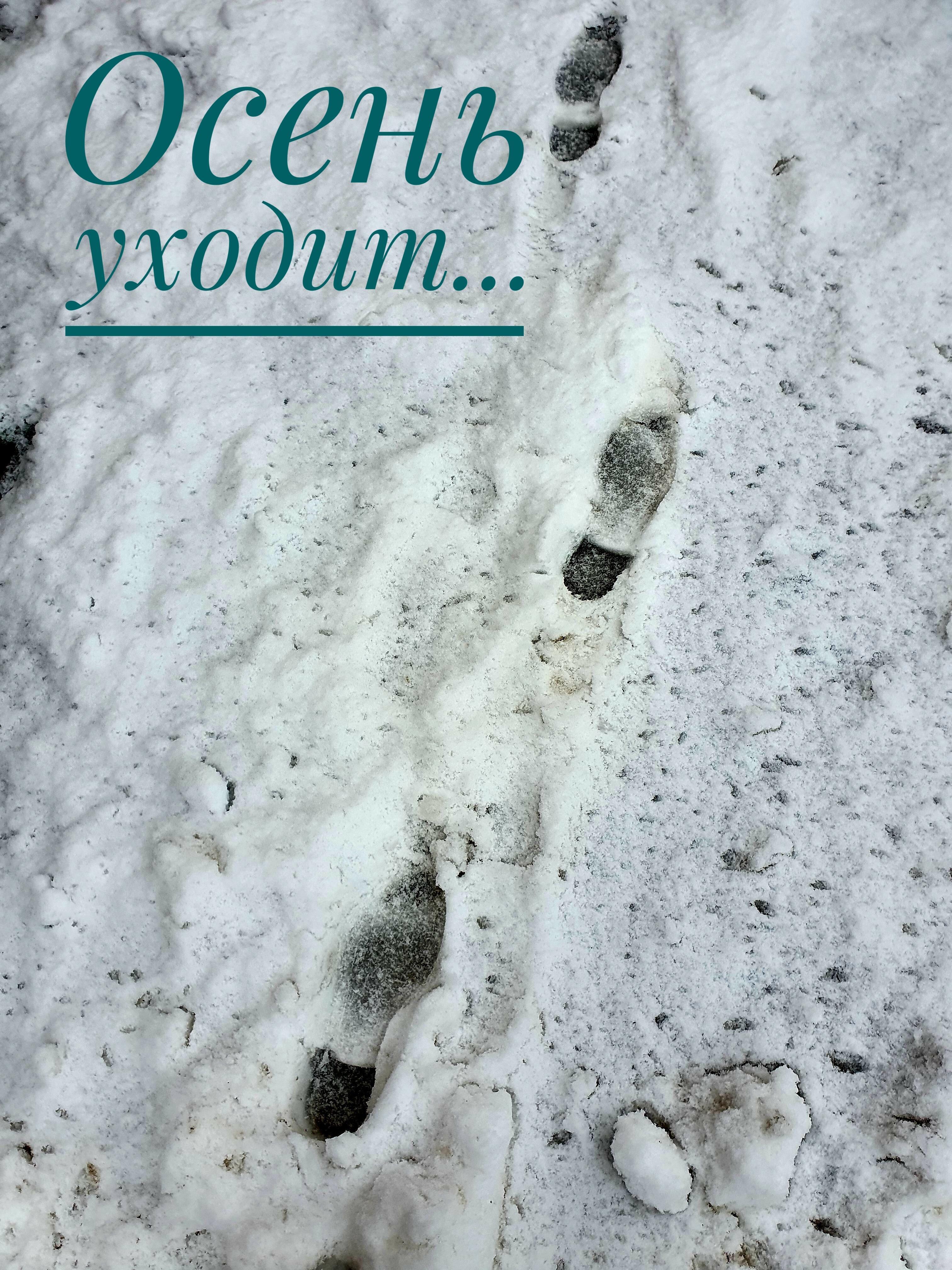 ...оставляя следы на снегу