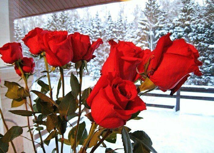 теряются фото букетов роз на снегу внимание стоит уделить