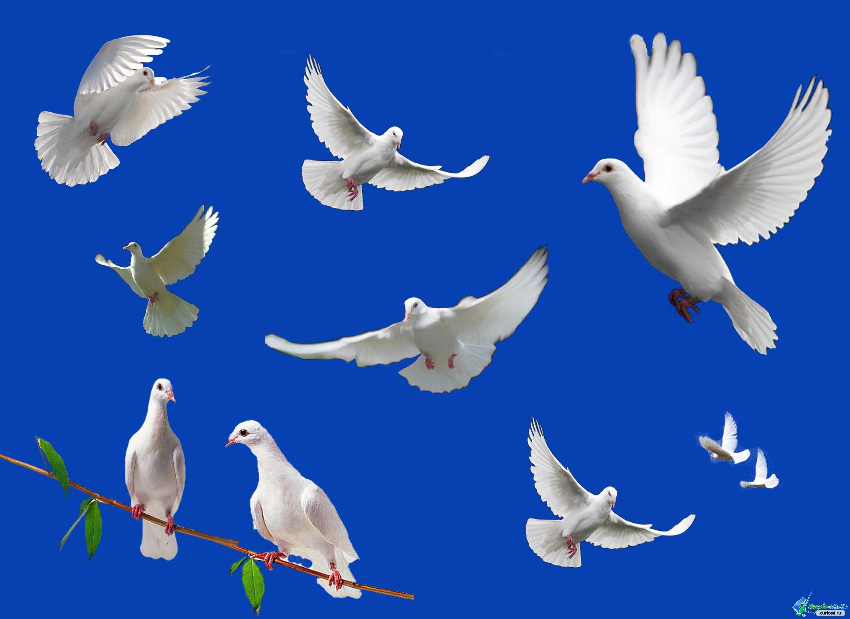 Итоги конкурса серебряный голубь россии