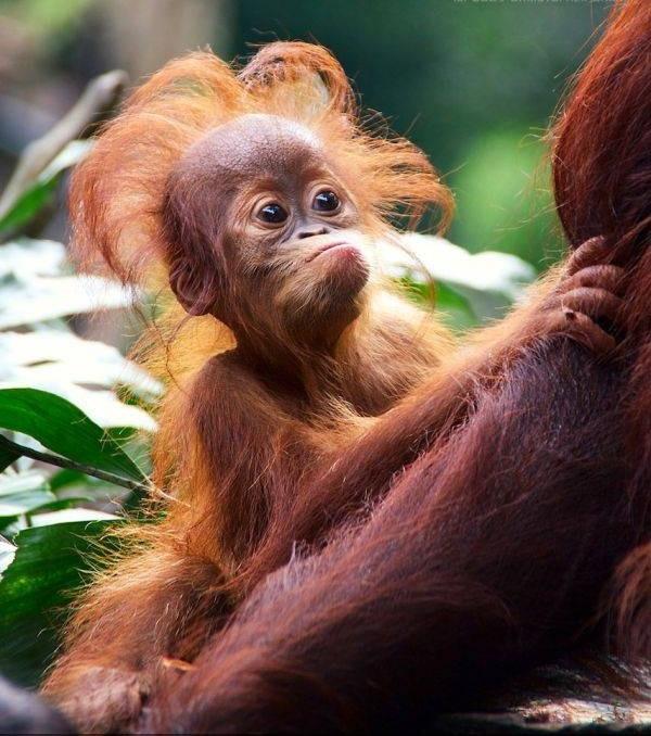 красивые открытки с обезьянами болезни