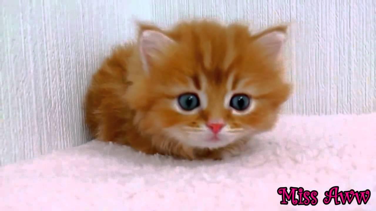Orange tabby kitten with blue eyes