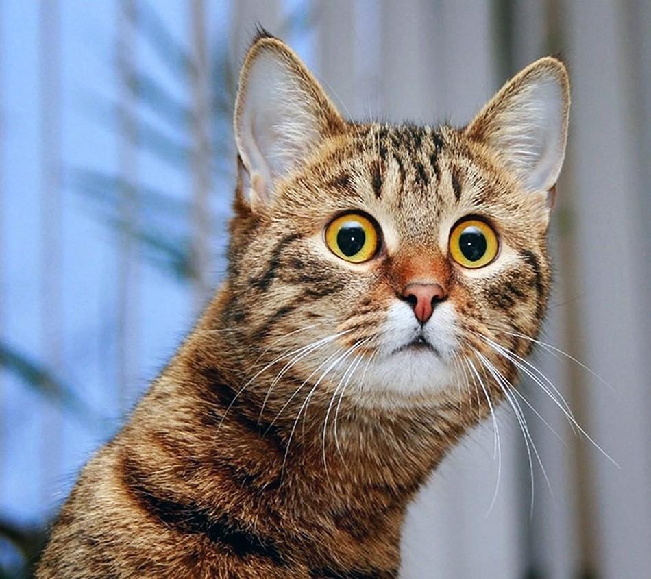 куда загрузить фото кошек бревен