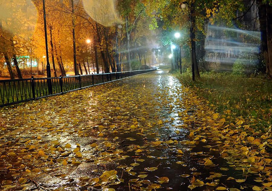 Осень картинки дождь
