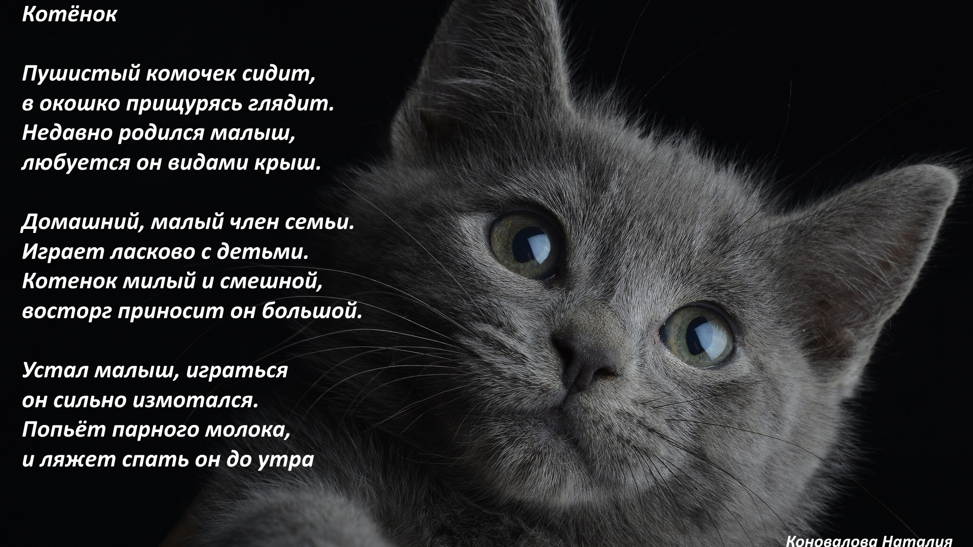 Кошки картинки с стихами
