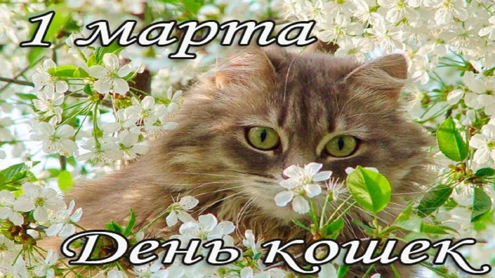 День кошек 1 марта поздравление своими словами