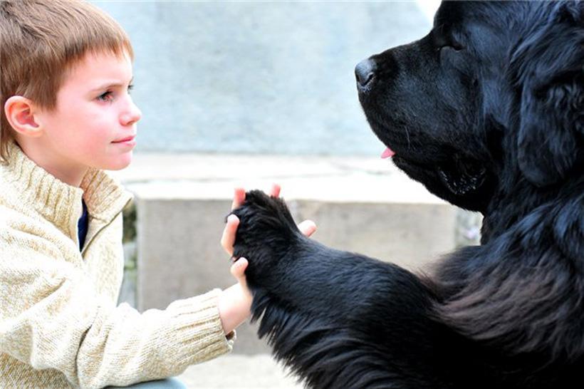 Пытаясь  гневно  оскорбить, Не обзывай врага собакой. Лишь пес способен так любить. Быть верным, преданным служакой.  Зверь з...
