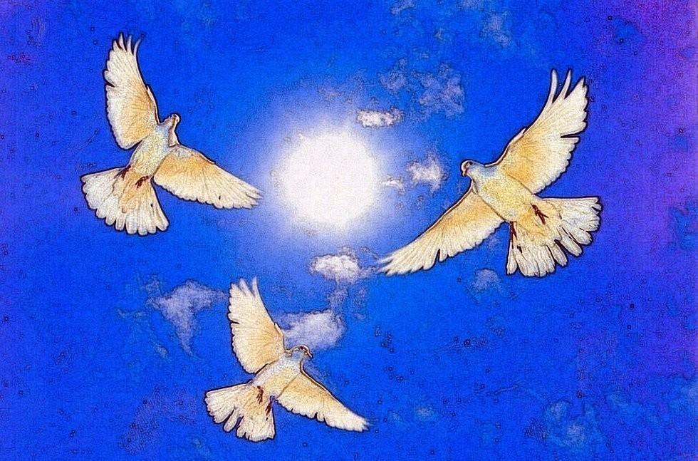 Покормите, ЛЮДИ, голубей.