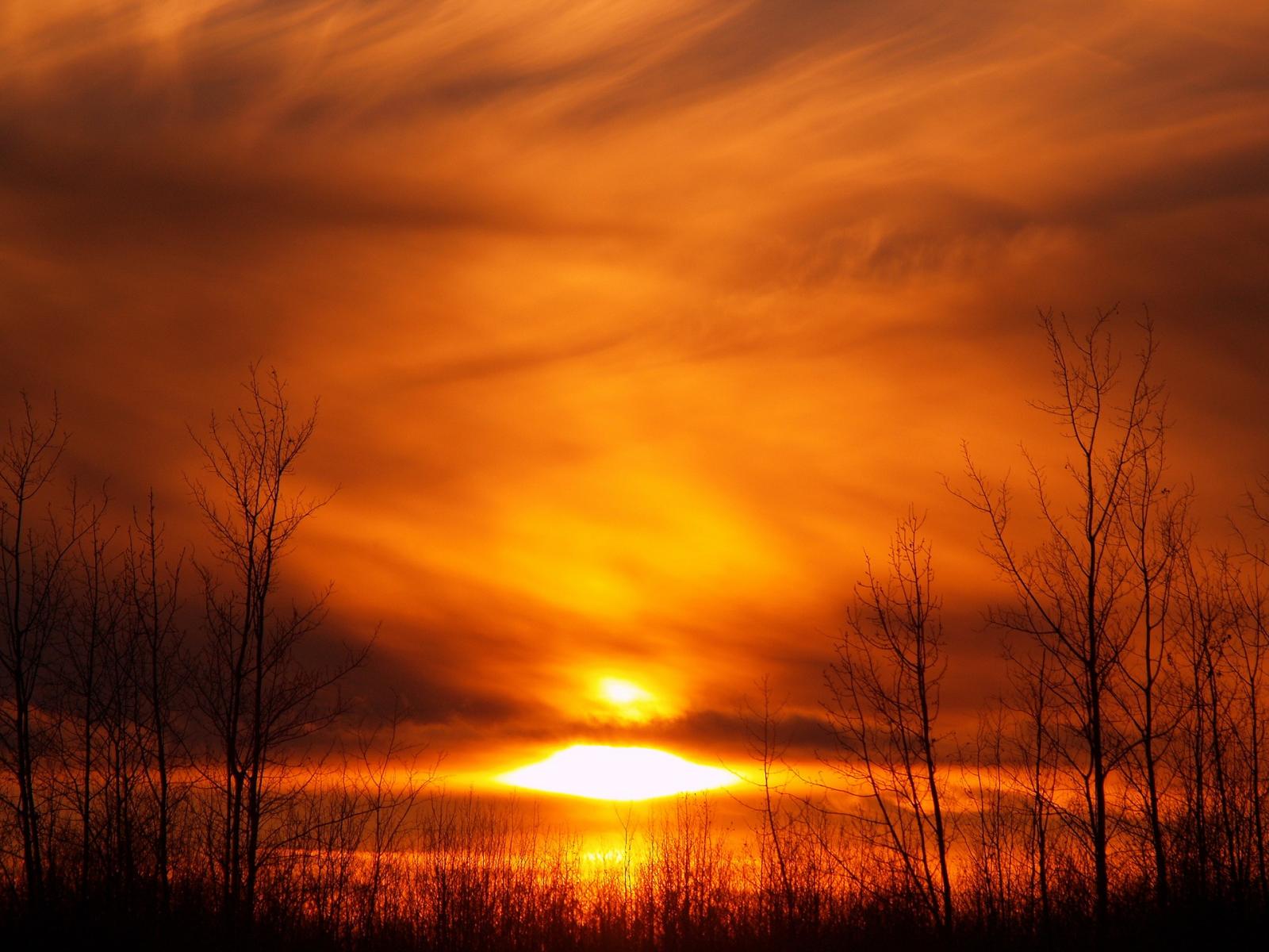 которые оранжевый рассвет фото болезнь, при