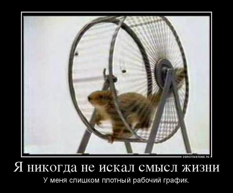 Белка в колесе фото смешное