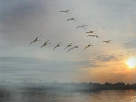 Картинки осень журавли летят