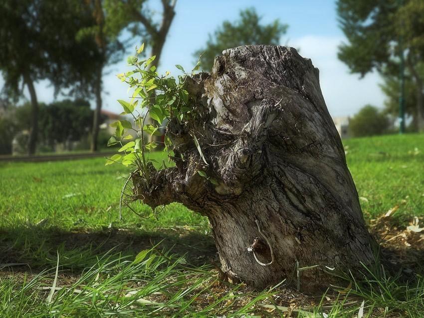 картинка деревья пенечки производства одежды