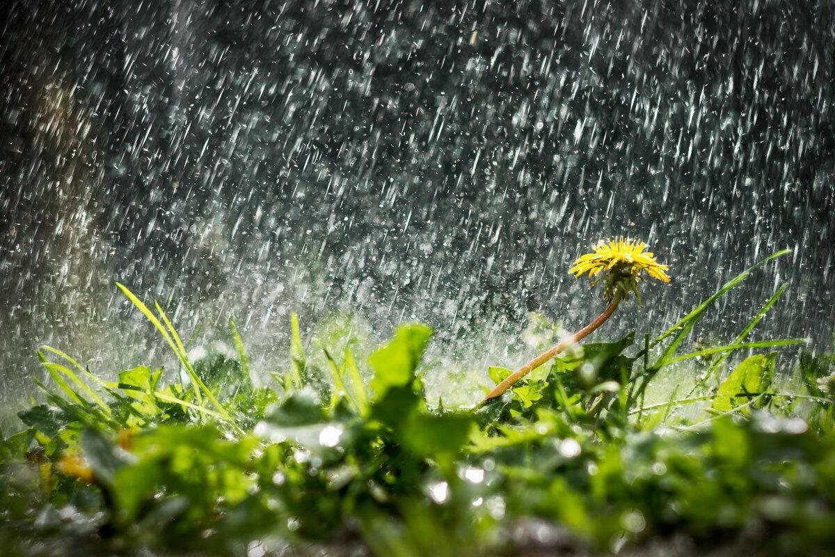В мире картинки с дождем