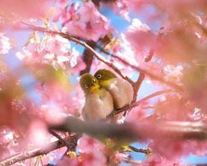 Любовь опять придёт весной