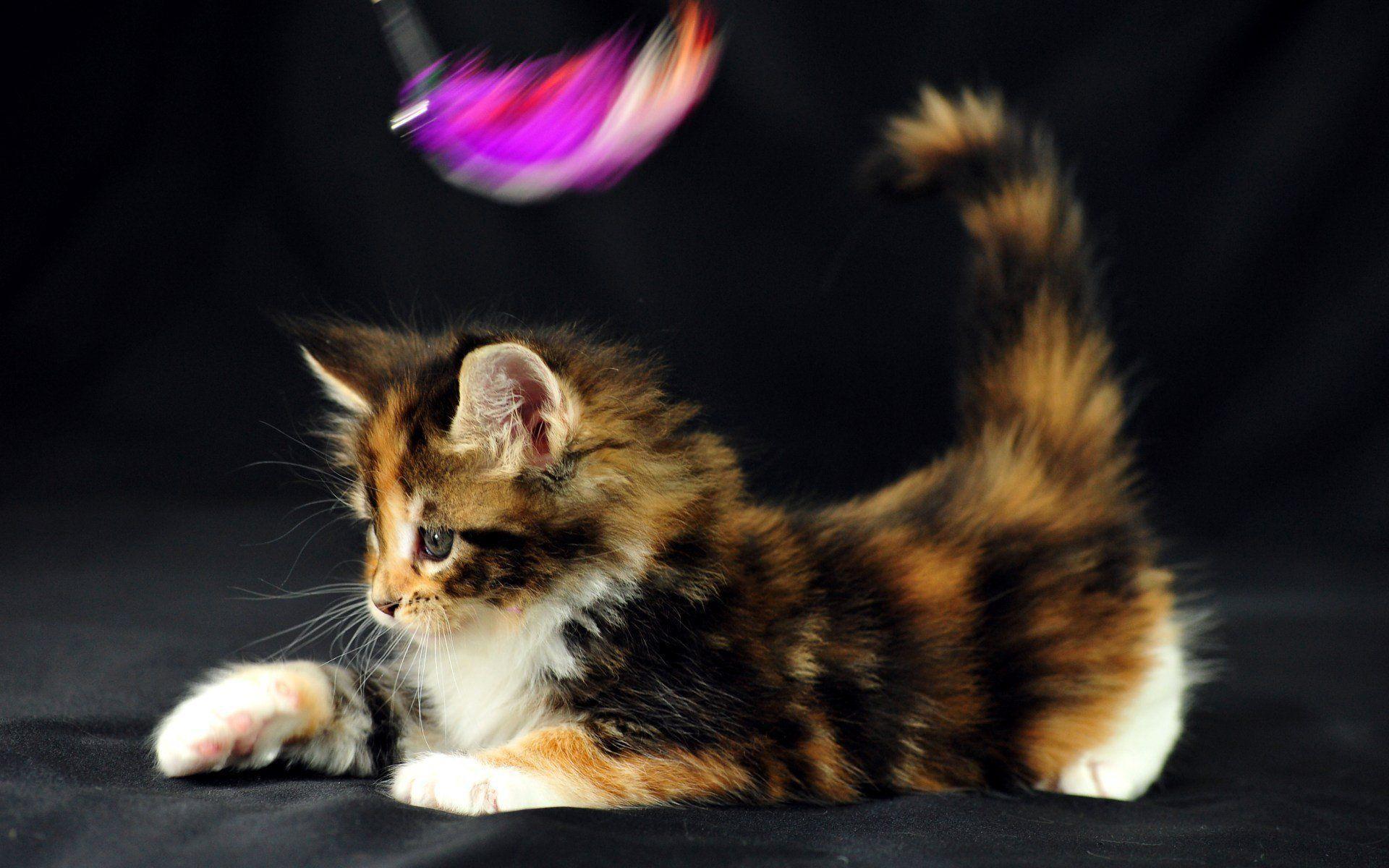 Фото прикольных многоцветных кошек