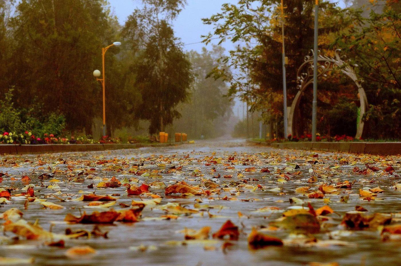 Осенние дожди картинки
