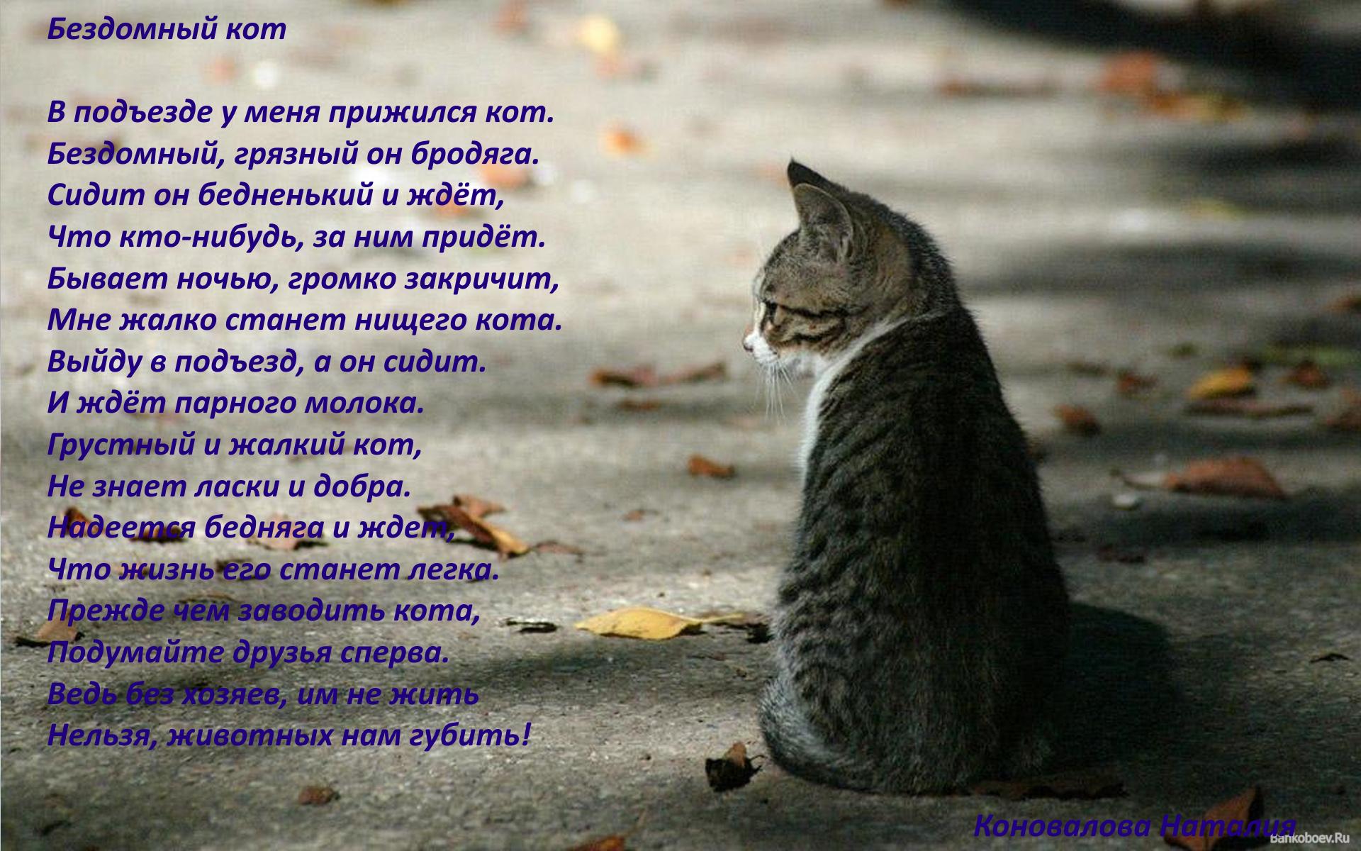 стихи от лица животных вариант