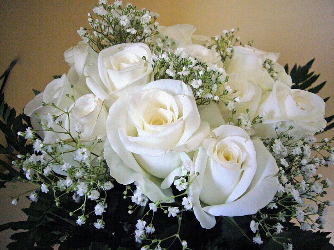 Картинки белые розы поздравления, листовки