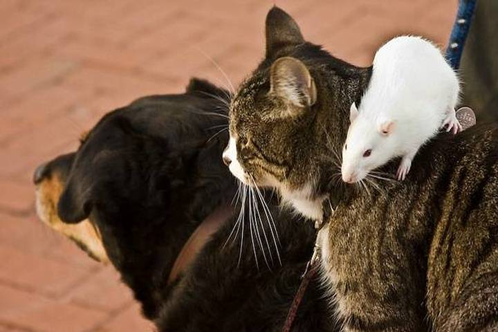 Фото где мышка обнимает кошку