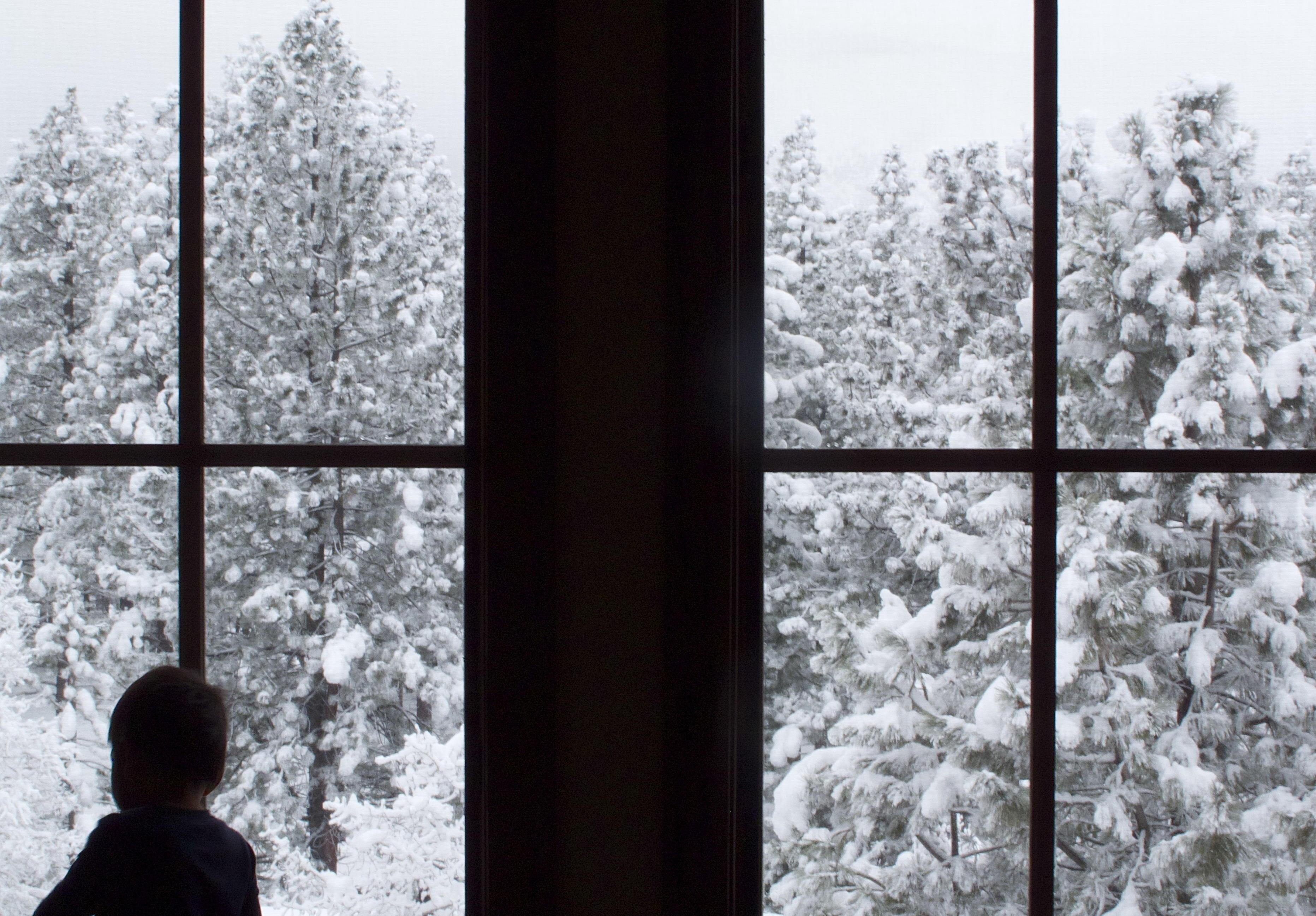 фото фото бегут деревья за окном разрезаем