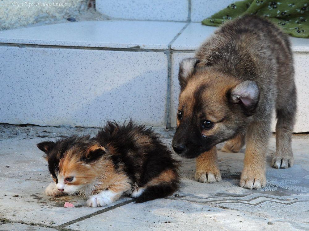 солнечногорск фотки кошек и собак бездомных размышления