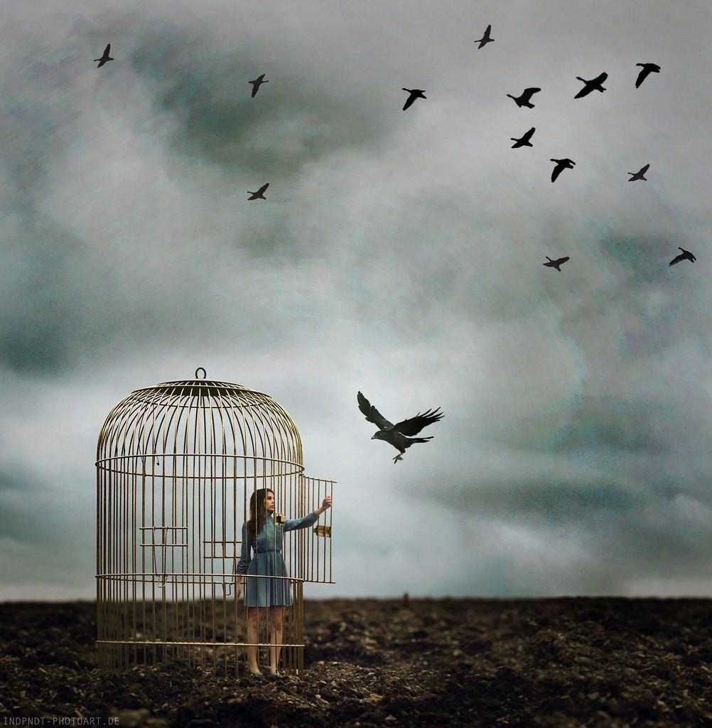 Птица вылетает из клетки ночью