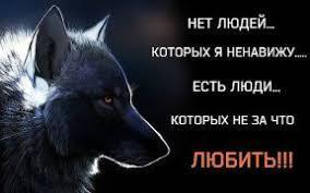 фото волка одиночки