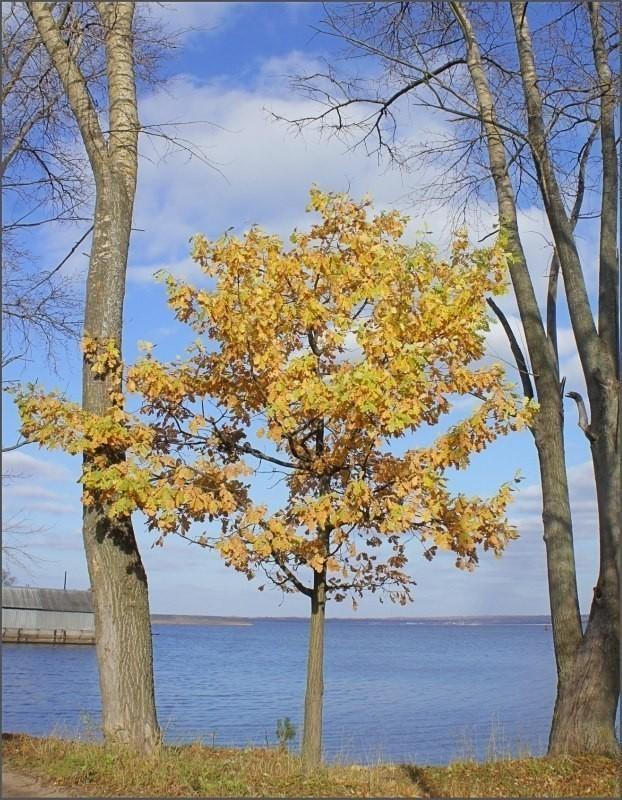 Исповедь дерева