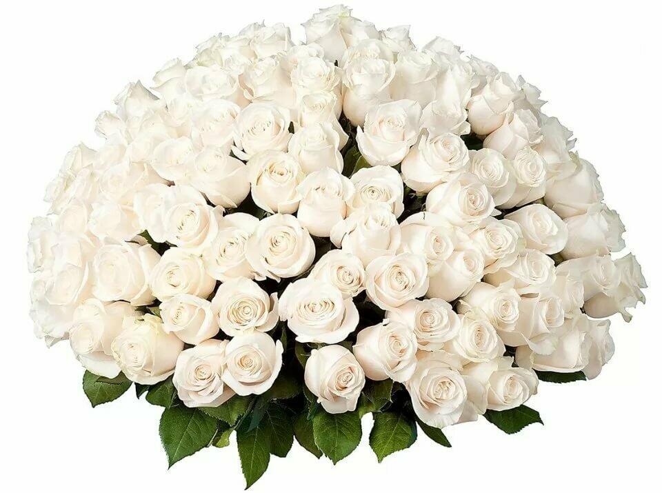 с днем рождения любимая картинки белые розы или