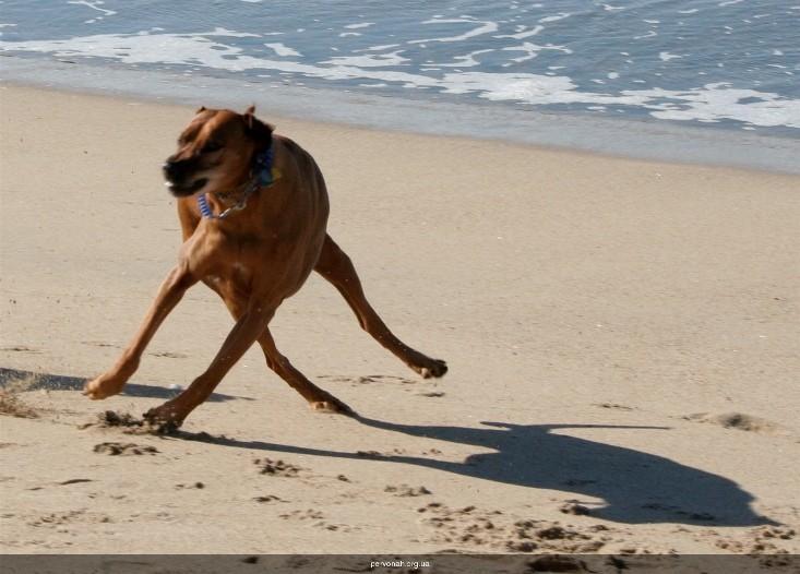 Самые смешные фото собак с надписями