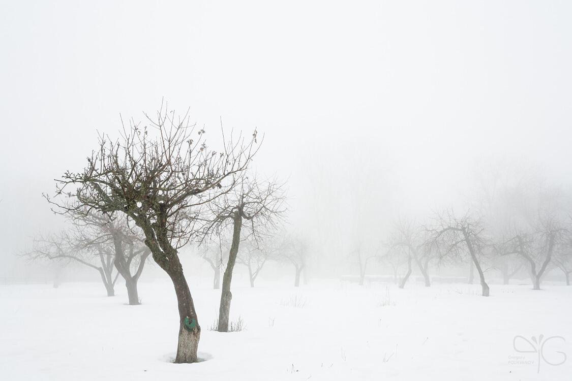 Зимняя вишня