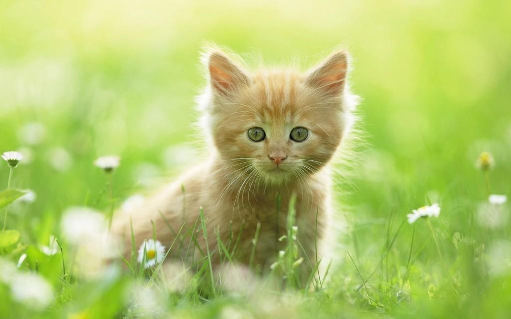 Котенок на траве  № 2959647 бесплатно