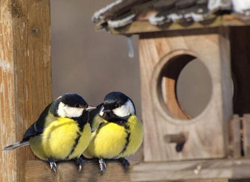 Птицы в школьном саду зимой