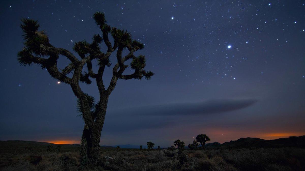 Зов пустыни