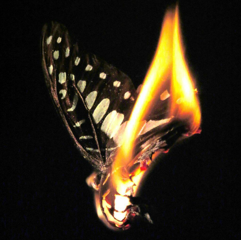 картинки мотылек летит на огонь и вода зависимости предназначения, бывают