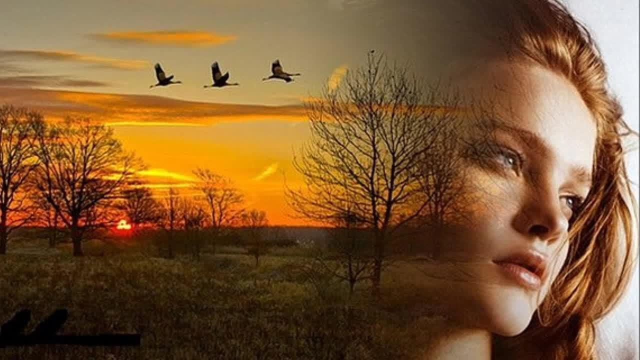 Вновь взлетают гуси-лебеди...