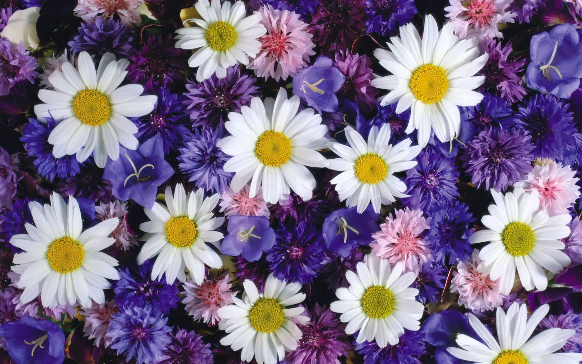открытка с множеством цветов устанавливают кухне, чтобы