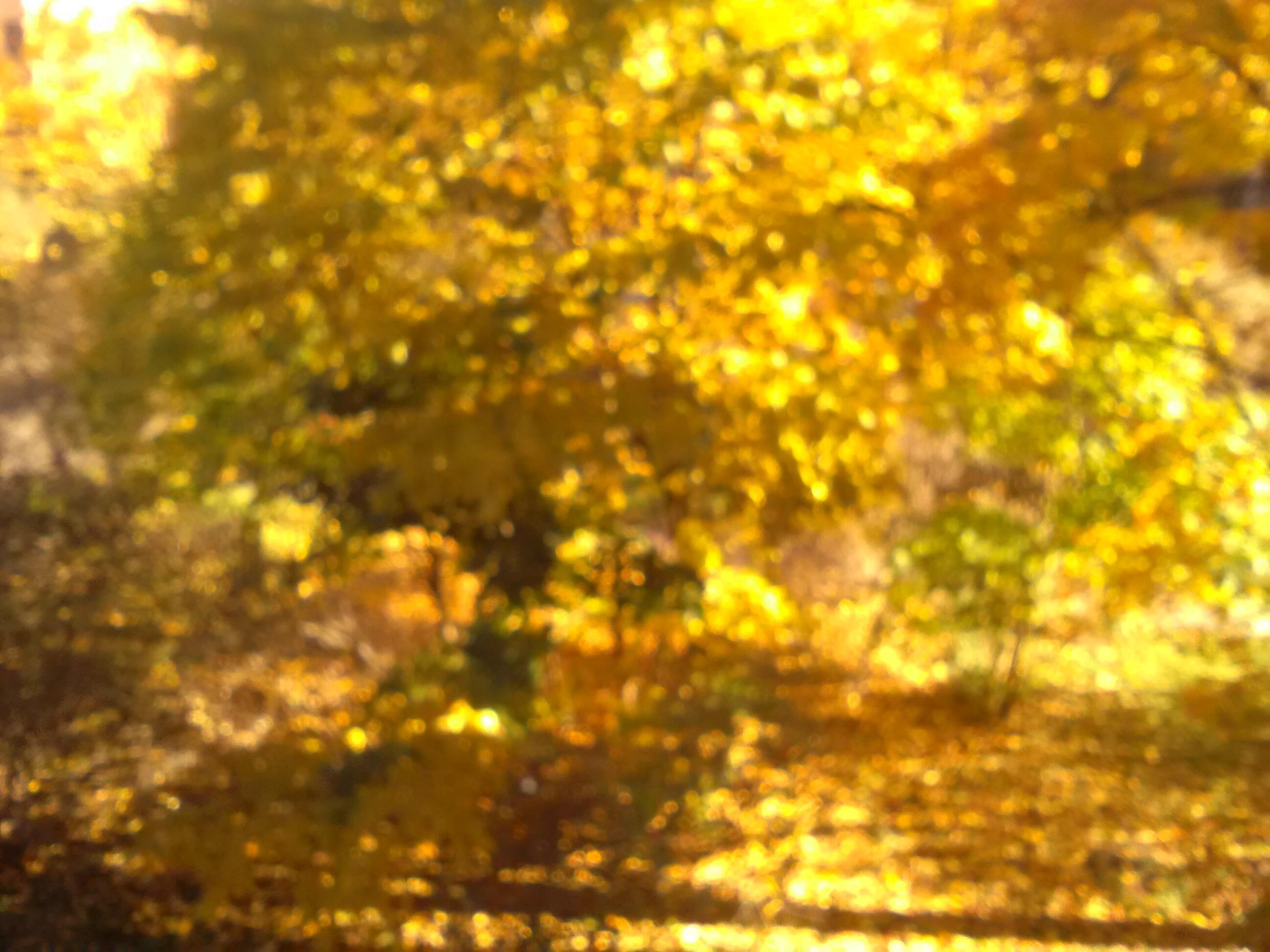 Душа листьев