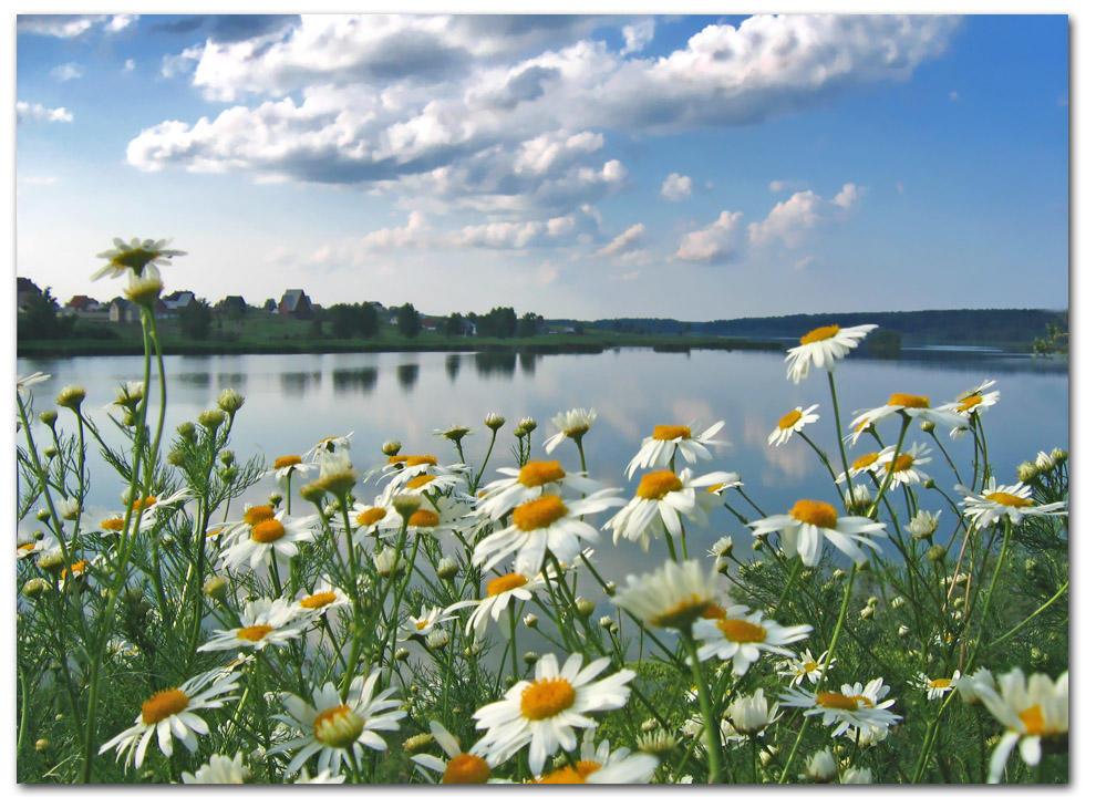 стихи здравствуй лето в ромашковом поле месяц июль хотите купить