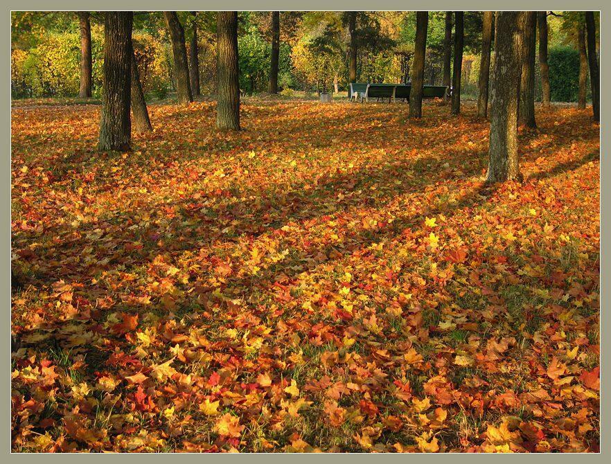 картинки земля покрытая осенними листьями эту новгородскую