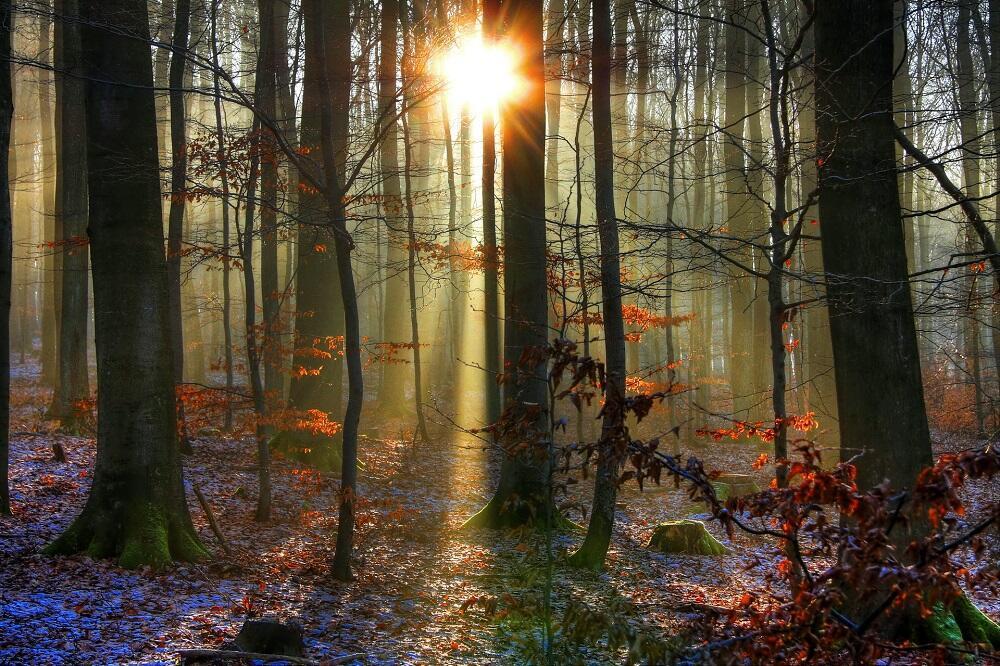 Последняя Улыбка Осени