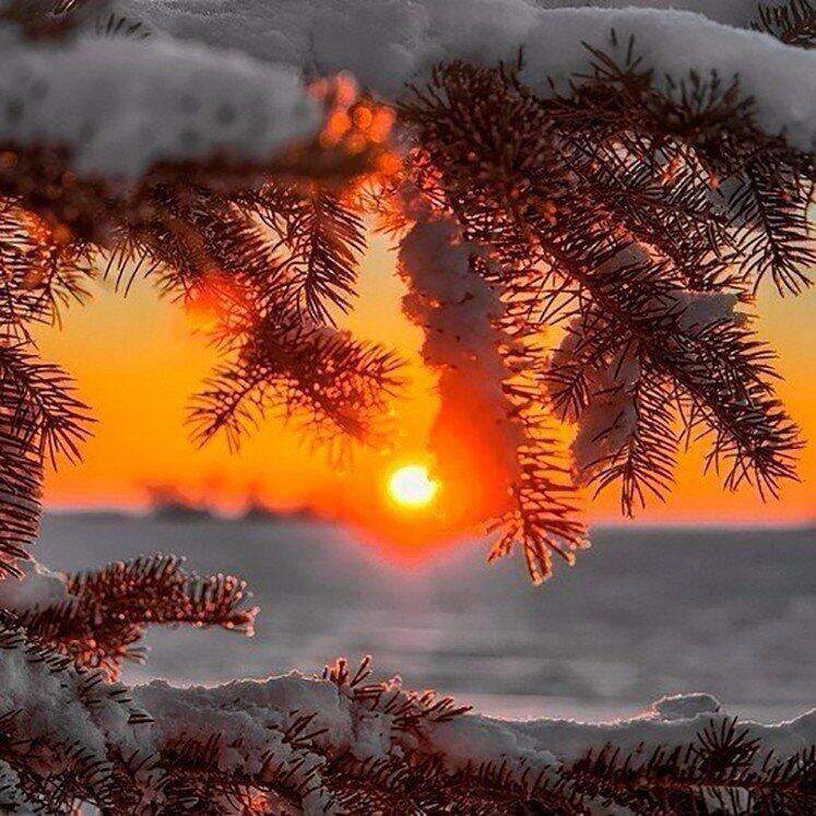 Запуталось солнце в ветках еловых...