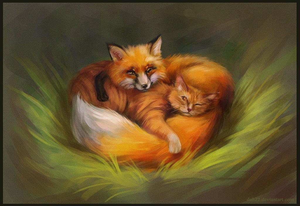 Картинки лисичка и котик