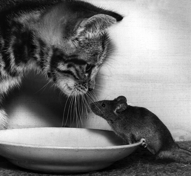 Водой, картинки кошки и мышки