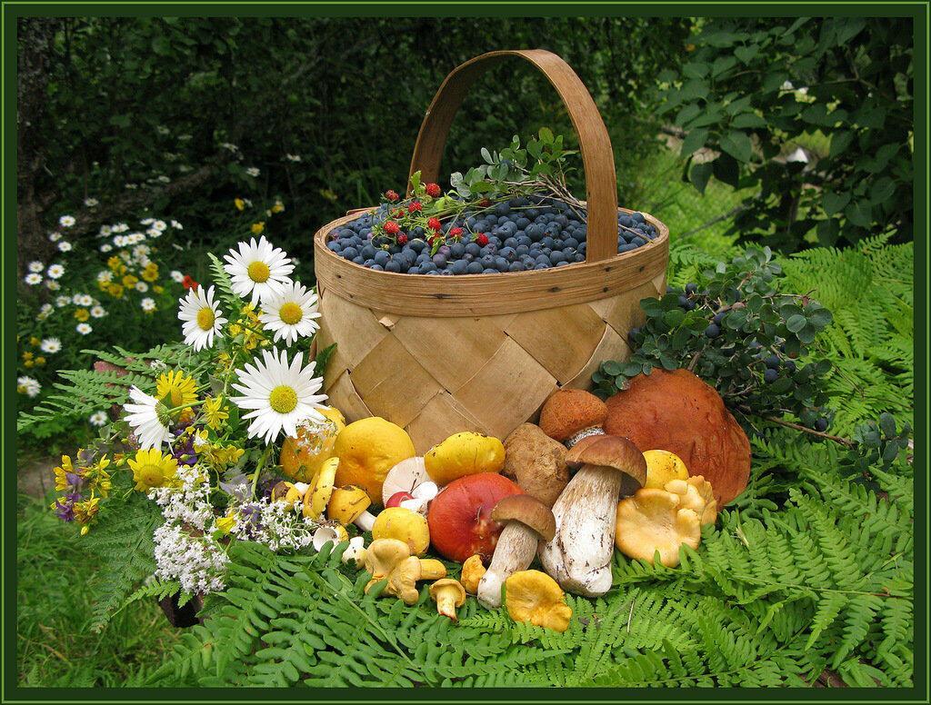 Щедро рассыпаны яблоки, жёлуди, луны...