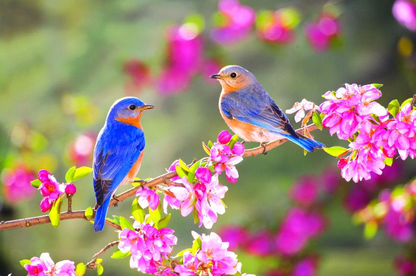Природа- краса жизни!