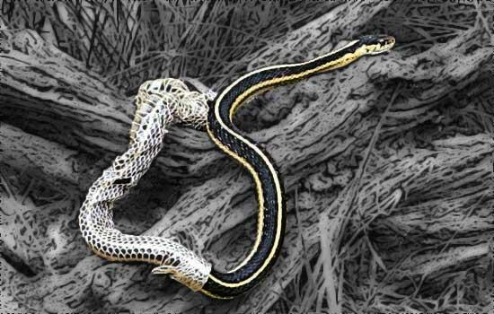 Змея меняющая кожу