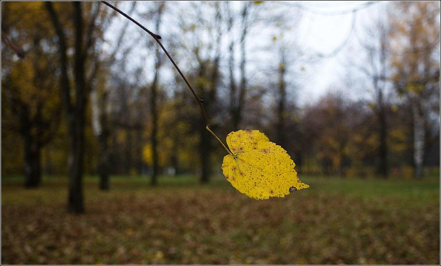 Последний листок....