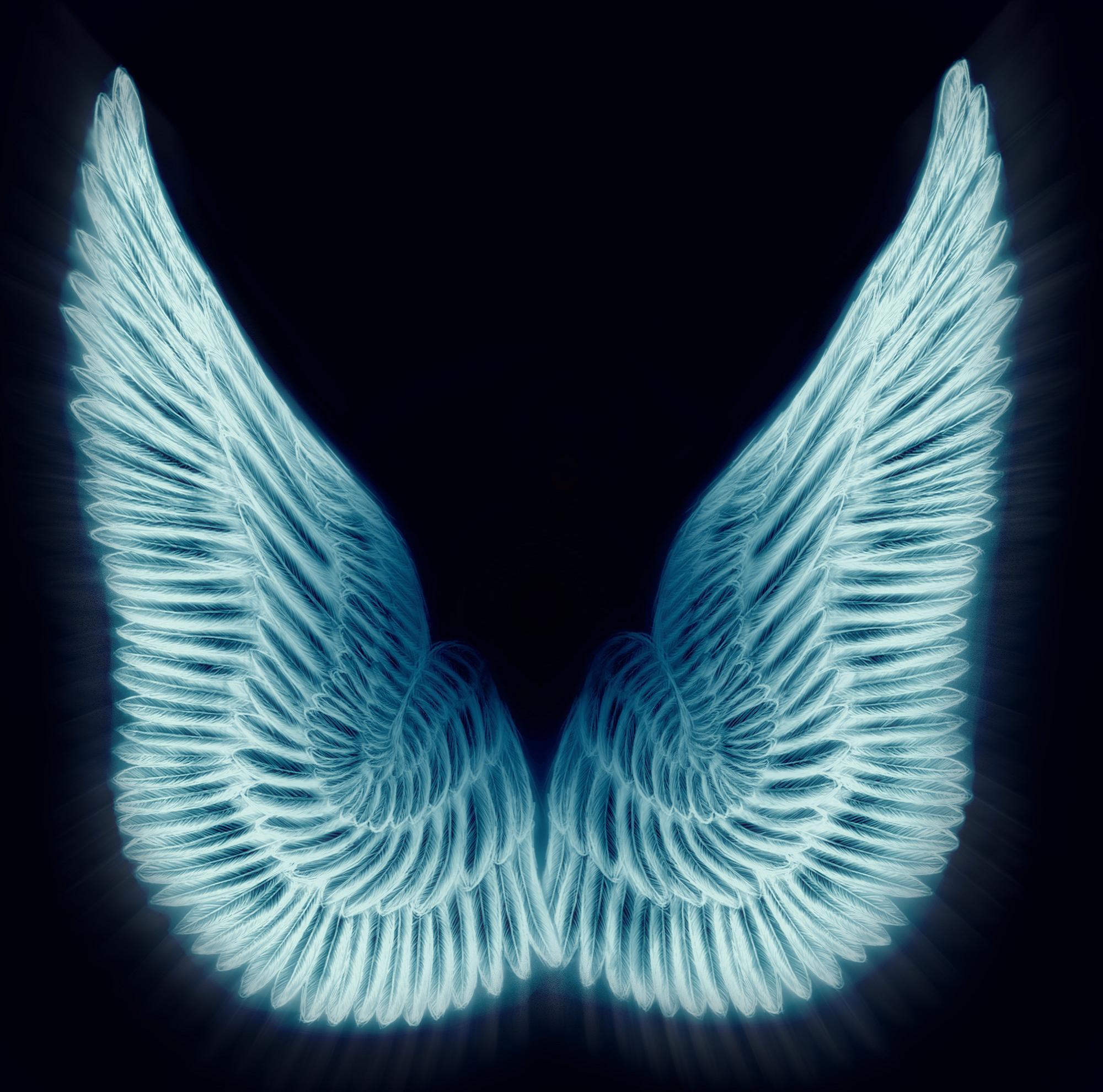 Крылья разные картинки