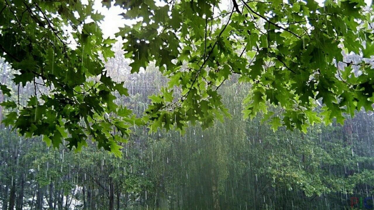 Дождливое утро в лесу